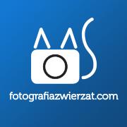 fotografiazwierzat