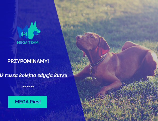 Kolejna edycja kursu MEGA Pies!