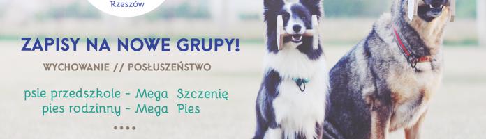 Nabór na jesienne kursy MEGA Szczenię i MEGA Pies