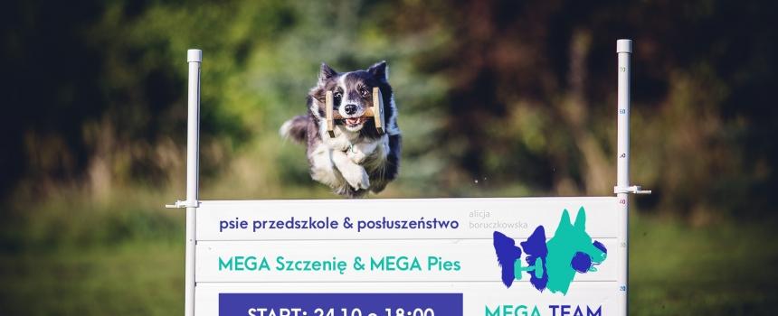 Rusza nowa grupa posłuszeństwa MEGA Pies