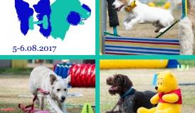 szkolenie psów rzeszów