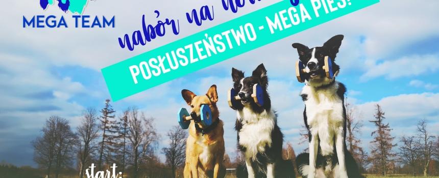 Nabór na wiosenne posłuszeństwo MEGA Pies