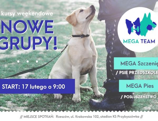 Start nowych grup weekendowych: psie przedszkole i posłuszeństwo