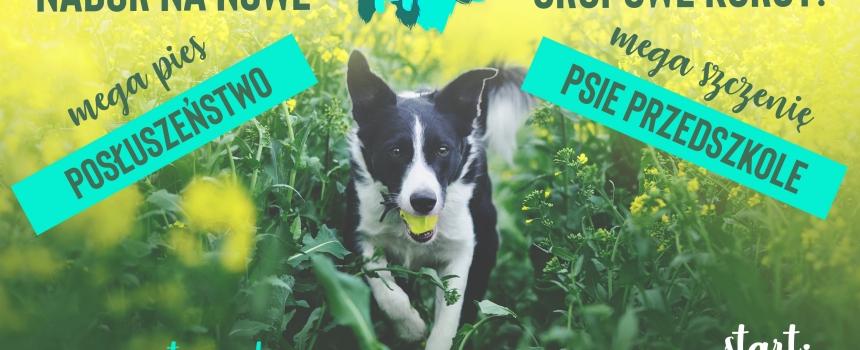 Nowy nabór na grupy posłuszeństwa i psiego przedszkola