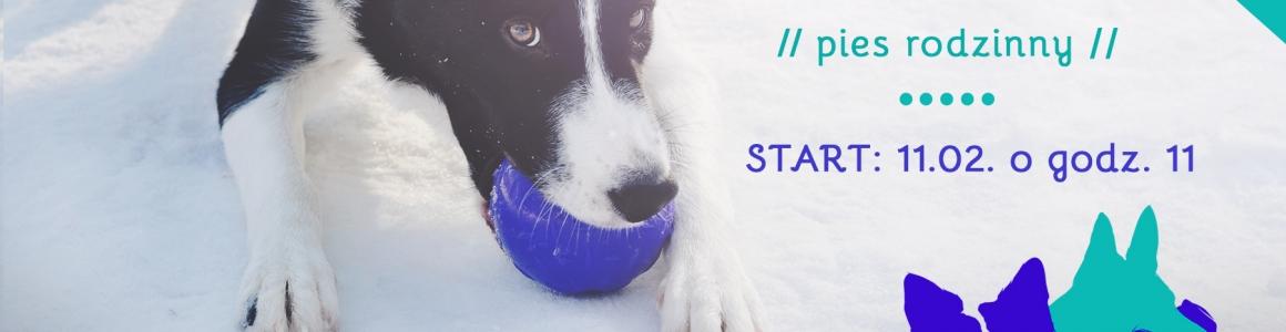LUTY! Kurs posłuszeństwa – MEGA PIES – pies rodzinny
