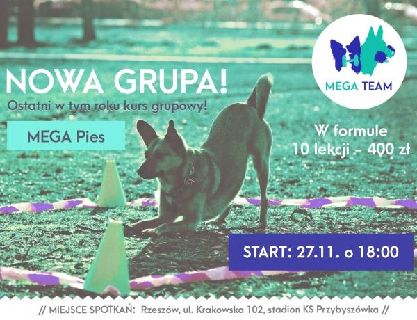 Ostatni w tym roku kurs MEGA Pies