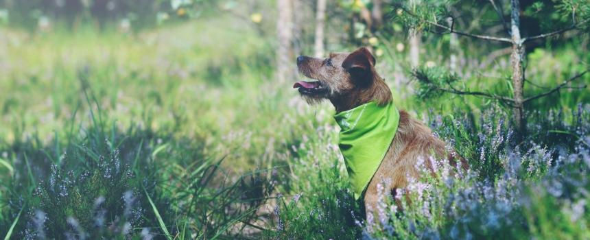 Nabór na intensywny kurs posłuszeństwa – MEGA Pies